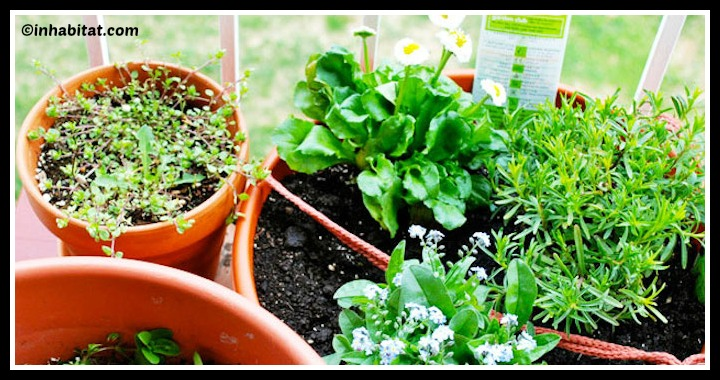 DIY Urban Garden Small Space Tutorial
