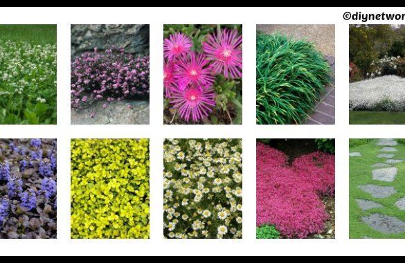 10 DIY Groundcovers for Garden