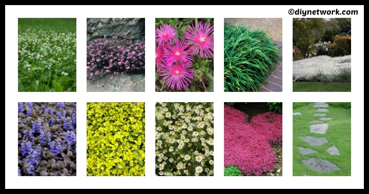 10 DIY Groundcovers for Garden