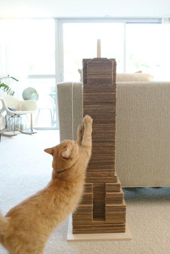 Cat Toy 7