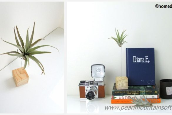 DIY Air Plant Stand Tutorial