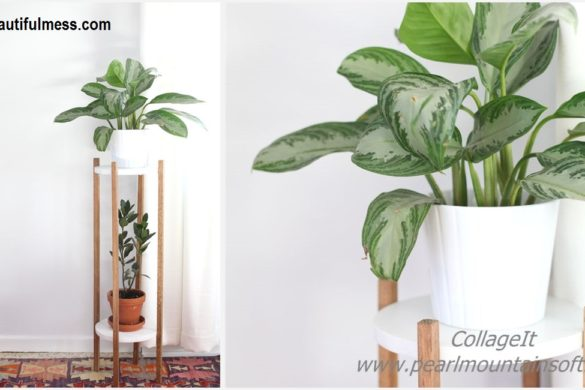 DIY Wood Plant Stand Tutorial