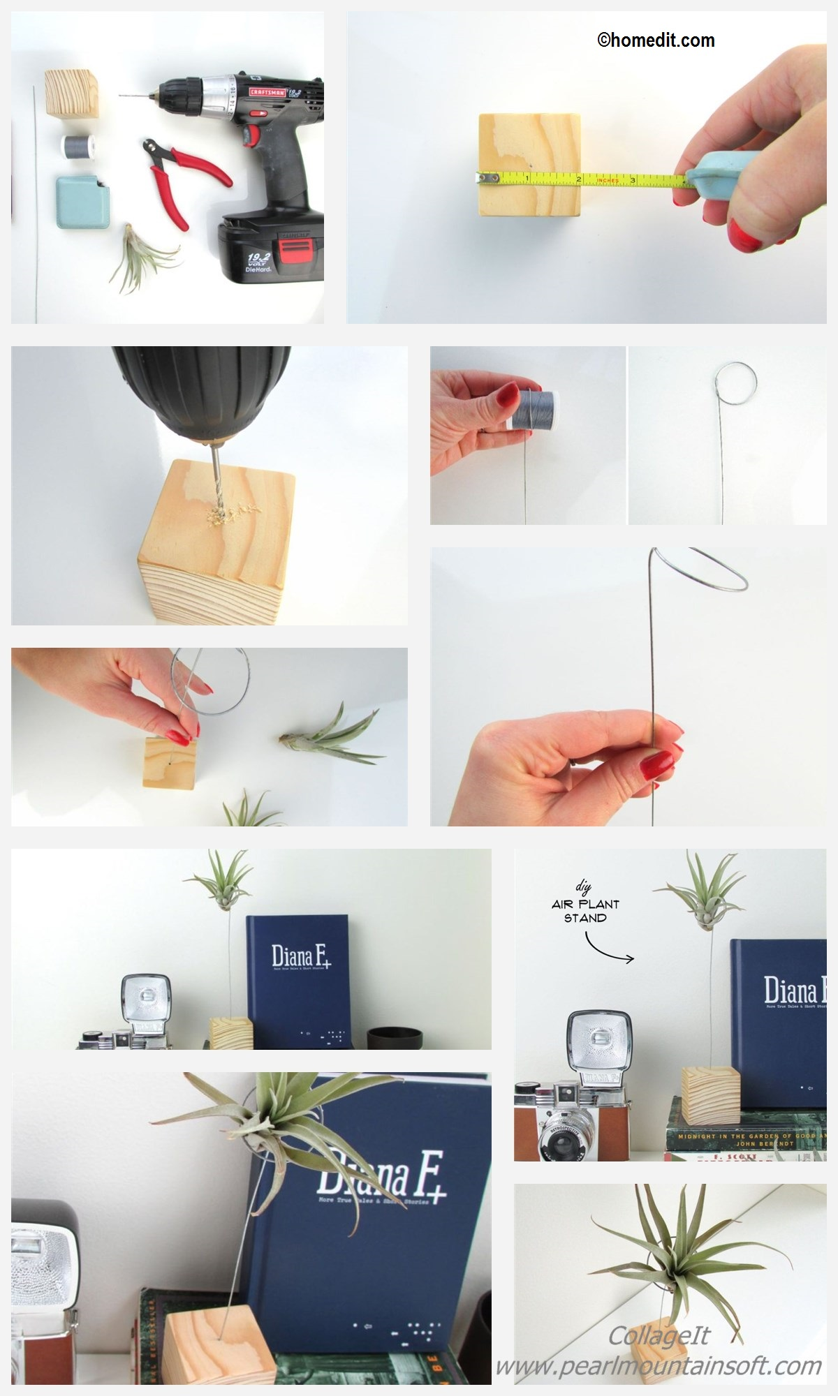 How to make an Air Plant Stand